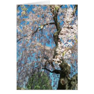 Cartão com a foto branca, florescendo da árvore