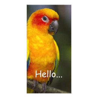 Cartão com fotos do papagaio de Sun Conure