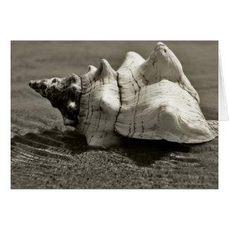 Cartão Conch preto e branco Shell