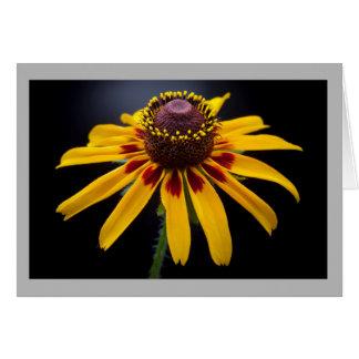 Cartão Coneflower amarelo brilhante de Texas da flor 17