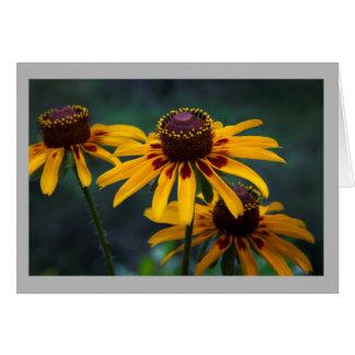 Cartão Coneflowers de Texas da flor 16 no selvagem