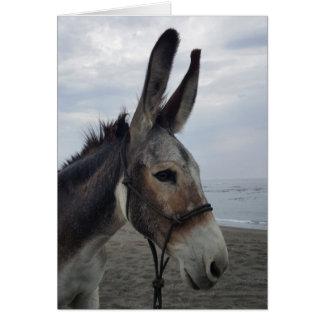 Cartão considerável do asno da praia