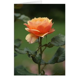 cartão cor-de-rosa da amizade do pêssego