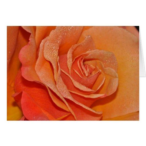 Cartão cor-de-rosa da laranja bonita