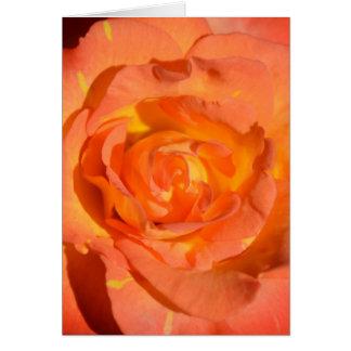 Cartão cor-de-rosa dos limões e das laranjas