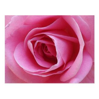 Cartão cor-de-rosa eterno