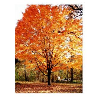 Cartão da acção de graças das folhas de outono cartoes postais