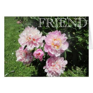 Cartão da amizade com as peônias cor-de-rosa