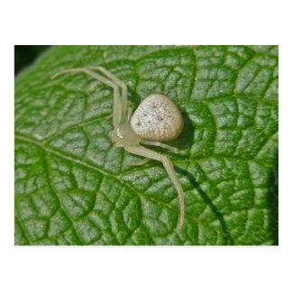 Cartão da aranha do caranguejo
