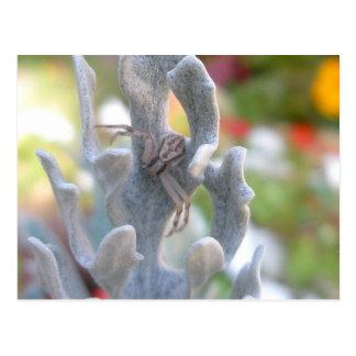 Cartão da aranha do caranguejo de Thomisid