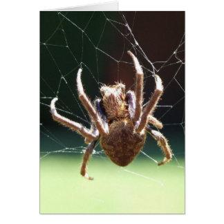 Cartão da aranha do tecelão da esfera do jardim