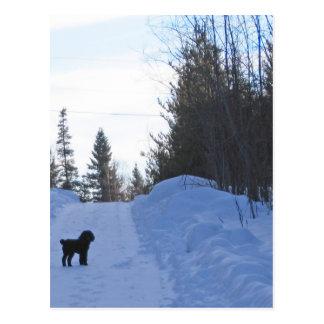 Cartão da caminhada do inverno cartões postais