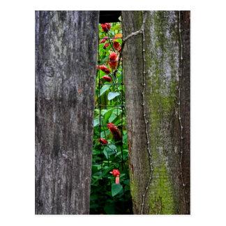 Cartão da cerca do jardim