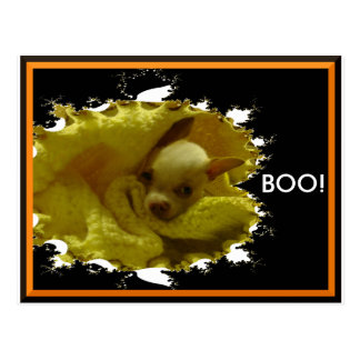 Cartão da chihuahua do Dia das Bruxas