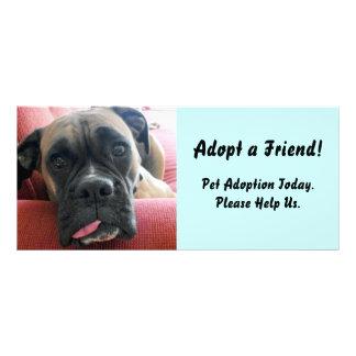 Cartão da cremalheira da adopção do animal de