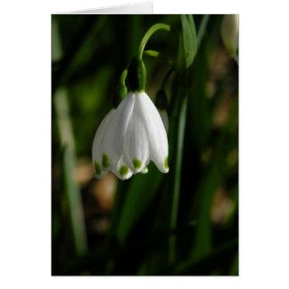 Cartão da flor da gota da neve