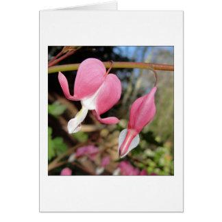 Cartão da flor dos corações de sangramento