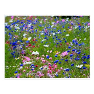 Cartão da flor selvagem