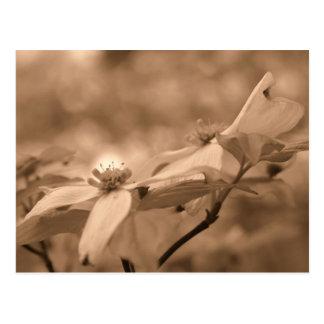 Cartão da fotografia da flor das flores do Dogwood