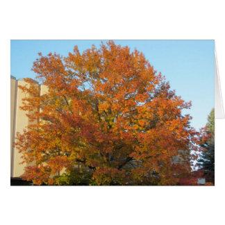 Cartão da glória do outono