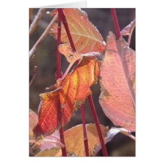 Cartão da harmonia do outono