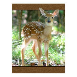 Cartão da jovem corça dos cervos de Whitetail Cartão Postal