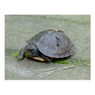 Cartão da tartaruga do bebê cartão postal