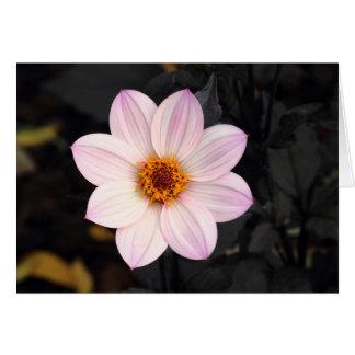 Cartão Dália cor-de-rosa