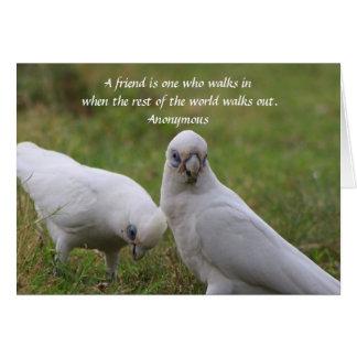Cartão das citações da amizade de Corella
