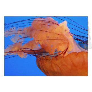 Cartão das medusa da natação