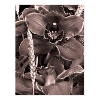 Cartão das orquídeas e dos pontos do Sepia Cartões Postais