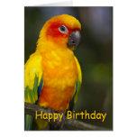 Cartão de aniversário do vazio do papagaio de Sun