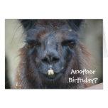 Cartão de aniversário engraçado animal do lama pre