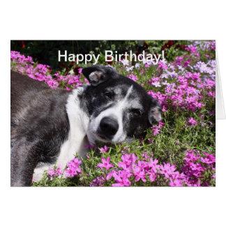 Cartão de aniversário sonolento do cachorrinho