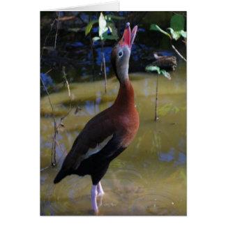 cartão de assobio Preto-inchado do pato
