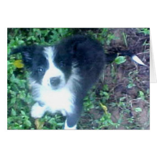Cartão de border collie Puppy~Photo