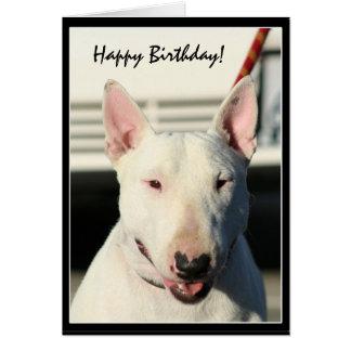Cartão de bull terrier do feliz aniversario