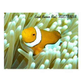 Cartão de Clownfish Cartões Postais
