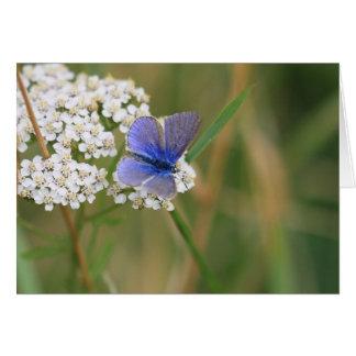 Cartão de cumprimentos azul comum da borboleta