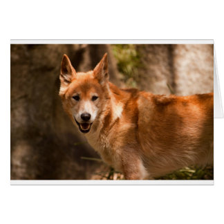 Cartão de cumprimentos do Dingo