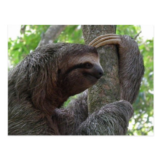 Cartão de escalada da preguiça da árvore