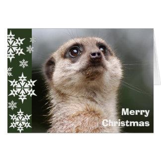 Cartão de Natal alerta de Meerkat