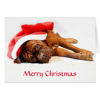 Cartão de Natal de Dogue de Bordéus