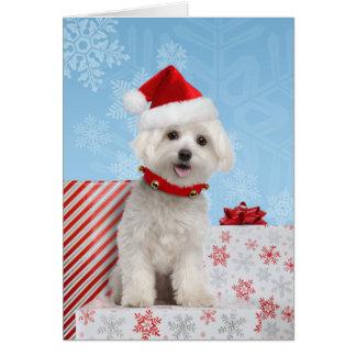 Cartão de Natal maltês do filhote de cachorro
