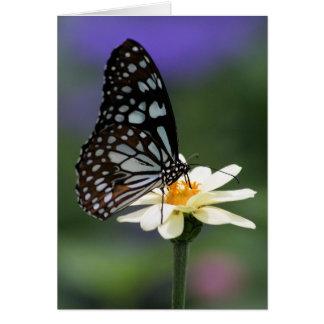 Cartão de nota azul da borboleta do tigre