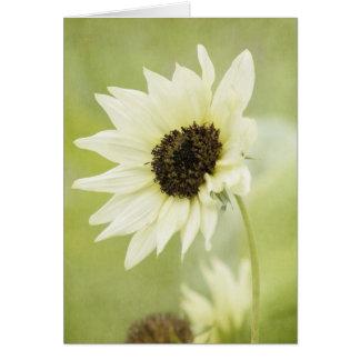 Cartão de nota branco do girassol