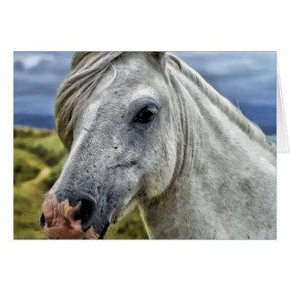 Cartão de nota do cavalo selvagem