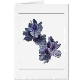 Cartão de nota do esboço da foto dos jacintos de á