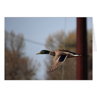 Cartão de nota do pato selvagem