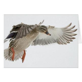 Cartão de nota fêmea do vazio do pato selvagem em